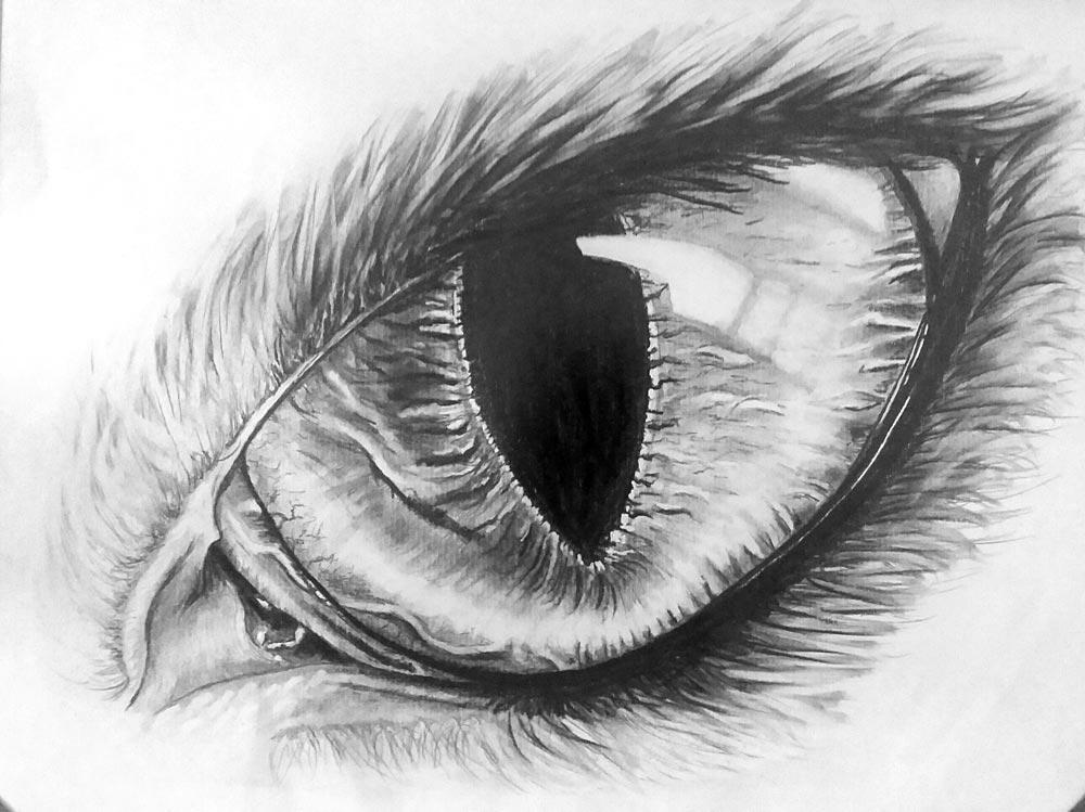 Tier_Auge